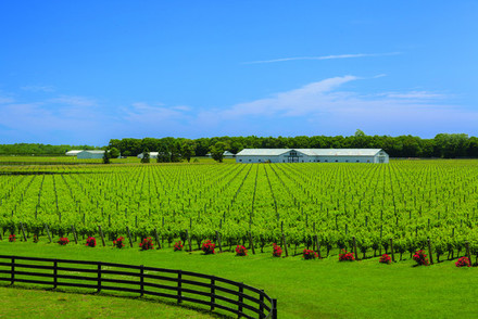 Big E Farm Long island
