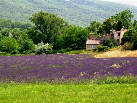 French Properties in Provence