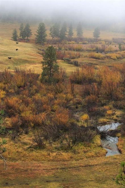 Ranch Tom Siebel